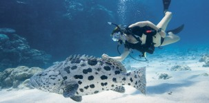 Lizard Island Resort: Dive