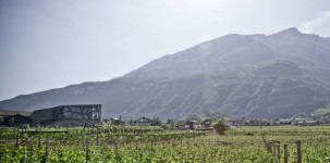 Alto Adige: visita alla Cantina Tramin di Termeno
